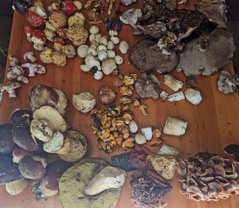 mushroom foray